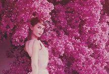 Audrey Hepburn  / Everything Audrey Hepburn / by Teresa Rybczyk