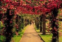 My Garden / by Janet Mckinnon