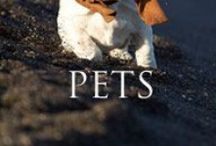 Pet Intel! / by John Tesh