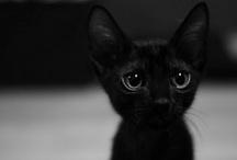 Black / by Janet Mckinnon