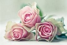 Blessed Roses (4U Nana) / Roses have a special meaning to me; they are beatific signs, symbols and answers, representing my Nana Rosa and St. Therese The Little Flower / by Synergy | SynergyByDesign | (Blogger)