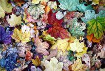 fall (mi amour) / by Rachel Hofman