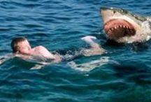 sea monsters/sharks / by Brooks Pratt