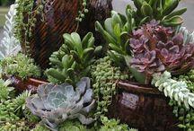 Succulents / by Jaimie Lynn