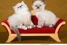 more cats / by Gaylynn Plummer