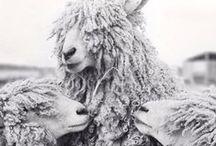 FLEECE & wool make yarn so: / by Betty L Frame