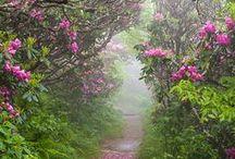 Down the Beaten Path / Serene pathways. / by Heather