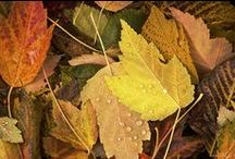 Autumnal / The richness of fall / by Wendy Bright