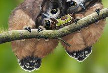 I love owls! / by Tina Smith