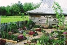 garden - veggies/potager / by Maria Smith