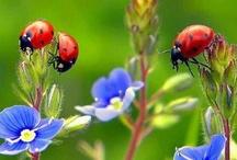 flowers / by Yevon Salfer