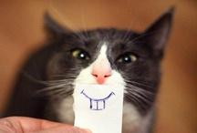 LOL / Funny stuff / by Cassandra Olivier