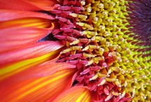 Flowers / by Terri K. Douglas