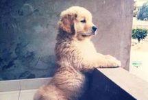Too Cute (: / by Brooke Wonderly
