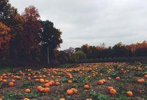 "L' A U T U N N O / ""Autumn...the year's last, loveliest smile.""  ― William Cullen Bryant / by Elizabeth Bradbury"