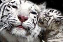 Animal Love - Save our Planet & Amazing Beloved Creatures / Animals, world peace, saving the planet, wildlife  / by Texas Meditates