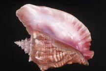 seashells / by Carol Wood