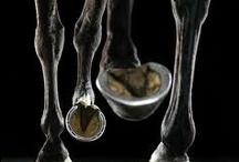 Horses / by Irena Szoltysek
