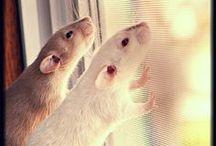 Rat-a-Tat-Tat / by Fran Klaas