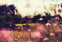 freespirit / livin' the free life / by erika audrey