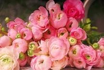 Flowers - crazy / by Gwynne Zink