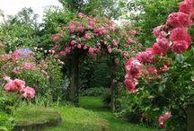 Secret Garden / by Ivani Grande