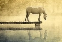 Beautiful horses / by Jamie Drake