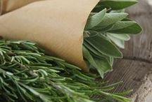 Gardening & Herbs / by Tabetha Sturgeon
