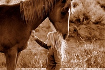 Horses / by Carrie Odgaard
