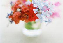 fleurs blumen fiori / by nat donnelly