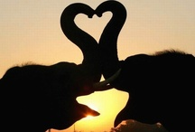 Elephant Love / by Kendra Spencer