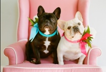 Frenchie Love ♥ / by PetCareRx