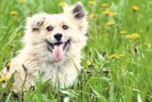 Flea &Tick Season / March marks the high season for flea and ticks, and as the weather gets warmer, the risk becomes higher. Learn tricks and tips to protect you and your pets from those pesky and potentially dangerous fleas and ticks.  / by PetCareRx