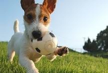 Summer Pets / Enjoy the cutest pets of summer!  / by PetCareRx