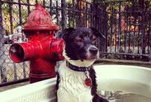 New York: A Pet Parent's Guide to the Big Apple / by PetCareRx