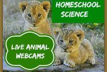 Homeschooling ideas / by Jamie Dressler