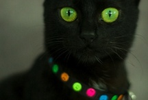 Soft Kitty Black Kitty / So Pretty!  I do so love my Pepper and Carbon cats.  :) / by Jennifer Jennings
