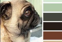 Colors / by Eneida Morales