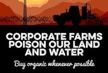 Organic Food / by Cornucopia Institute