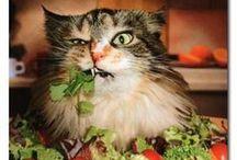 Salad Meals / by Sharron Boerum
