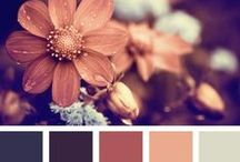 Color Schemes  / by Laura Young