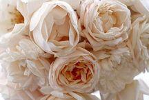 Roses and Grace / Elegant | Soft | Gilded | Feminine / by Grace Anne Vergara