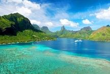 Tropical Paradise!! / by Sara MacArthur