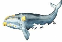 Ocean Animals in Art / by oceans initiative