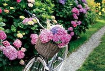 Gardens / It is the garden designer's job to hide the vulgar and the common as far as the eye can see and include only the excellent and splendid. ~ Andrew Crofts, Secrets of the Italian Gardener / by Jennifer Emmer