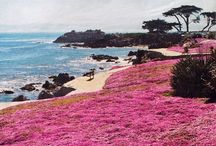 California / The most beautiful state in the country (ok, I'm a little biased)... / by Jennifer Emmer