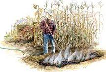 gardening etc / by Diana Jones