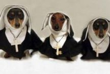 Doxie Goodness / Wiener dogs! Gotta love 'em. / by Eve Wentworth