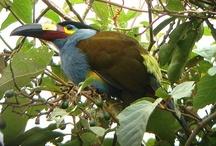 Birding Adventures / Follow our partners on fantastic birding adventures around the globe. / by Leica Birding
