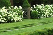 Gardens and Terraces / by Joy Corine Henderiks